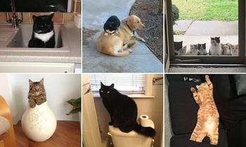 Кошки, которые идут, куда захотят!