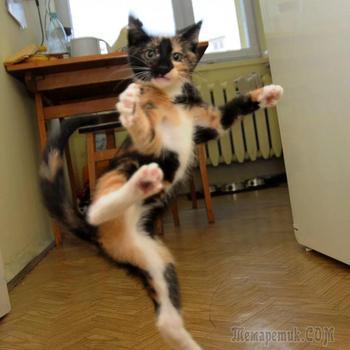 Кошки, постигшие боевое искусство ниндзя