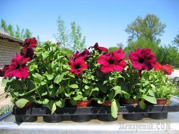 Какие цветы посеять на рассаду в марте