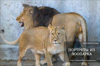 Фотопрогулки.   Портреты из зоопарка