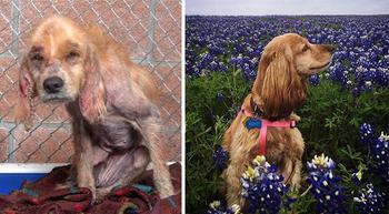 До и после: душераздирающие примеры перевоплощения собак, которые обрели любящих хозяев