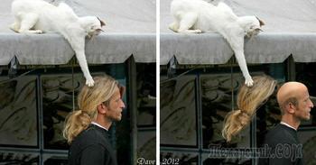 Обнаглели до ручки: фото котиков, которые совсем совесть потеряли