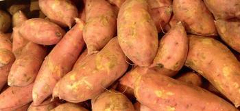 Особенности выращивания батата