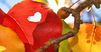 Гороскоп любви для всех знаков зодиака на неделю 31 октября – 5 ноября 2017