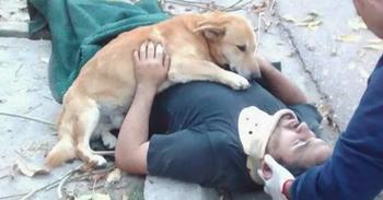 Пёс не оставил своего хозяина в беде
