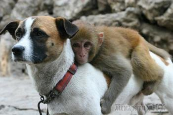 Фотографии, доказывающие, что дружба между животными не знает границ