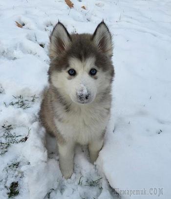 Забавная реакция животных впервые увидевших снег