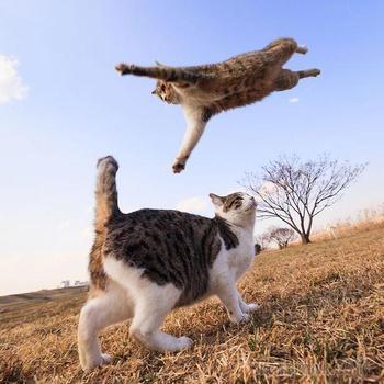 Ниндзя-кошки, которые познали древнее искусство ниндзюцу в совершенстве
