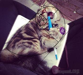 20 доказательств того, что коты — само совершенство