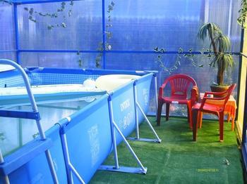 Дача: рубленая беседка, баня и крытый бассейн