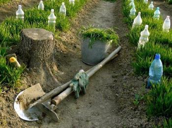 Сколько готовится компост, перегной, травяной настой и зреют опилки