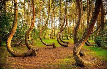9 самых удивительных лесов планеты