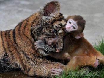 Дружба среди животных есть!