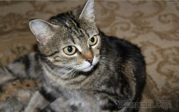 Самые умные породы кошек: топ - 10 сообразительных животных