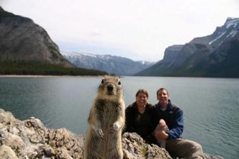 20 смешных животных, способных мастерски испортить любую фотографию