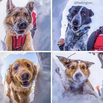 18 историй о героических собаках, которые помогают людям, вдохновляя любить их ещё больше