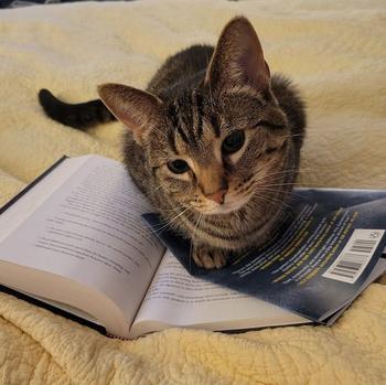 16 убедительных свидетельств, что домашние кошки в душе те ещё вредины