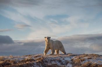 Запредельно красивая «Дикая природа России – 2018»