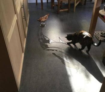 """Заведи кошку"", - говорили они. ""Кошки привносят в дом уют"", - говорили они…"