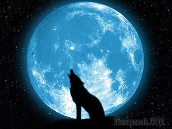 Волки, просто волки, просто красивые волки!