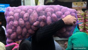 Белоруссия поможет: почему России не хватает картофеля