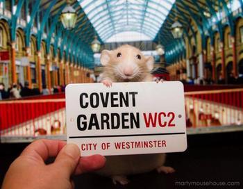 Захватывающие приключения очаровательного крысёнка Марти