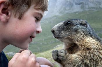 Удивительная дружба мальчика с альпийскими сурками