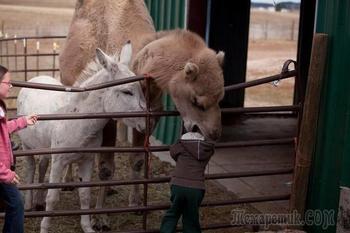 Смешные случаи, когда поход в зоопарк не оправдал ожидания