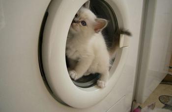 Аттракцион для кошек