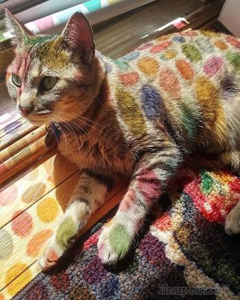 30 уникальных котов, которые любят солнце больше всего