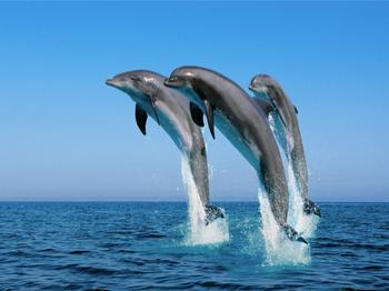 Интересные факты о дельфинах – что известно о братьях по разуму?