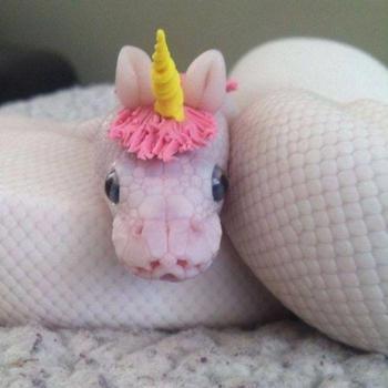 20 фотографий очаровательных змей, которые помогут вам победить свой страх