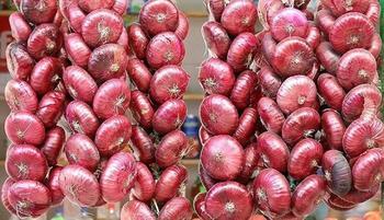 Один из самых вкусных видов лука — ялтинский