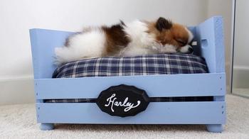 Уютный лежак для собаки из обыкновенного ящика