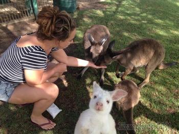 Доказательства, что животные не могут испортить фотографию, даже если попали на нее случайно