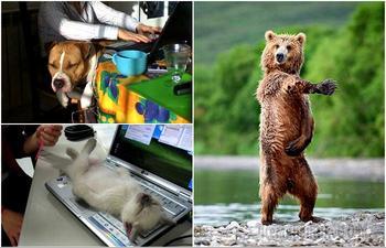 17 уморительных животных, которые зарядят позитивом и заставят посмеяться от души