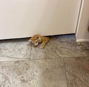Кошки, которым плевать на личное пространство хозяев