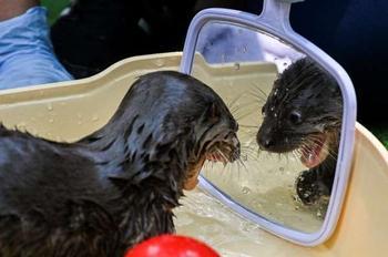 18 животных, которые познакомились с зеркалом и их реакция говорит сама за себя