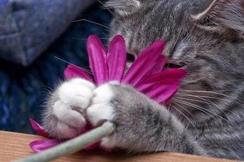 20 кошачьих растений, которые требуют ласки и еды