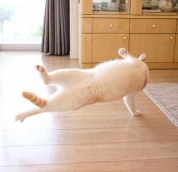 Танцующий кот Чако из Японии