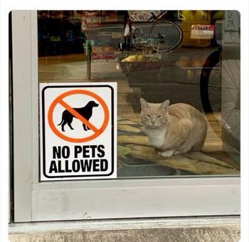 Коты, возомнившие себя хозяевами магазинов