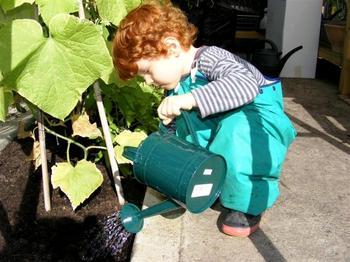 Правильный полив огурцов: в теплице и открытом грунте