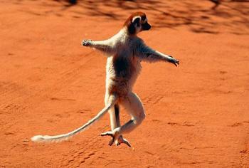 20 танцующих животных, которые сделают ваш день и настроение