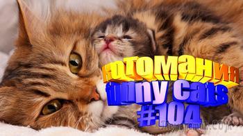 Смешные коты | Приколы с котами | Видео про котов | Котомания #104