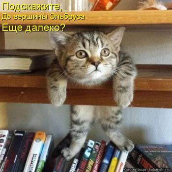 Новая котоматрица для хорошего настроения