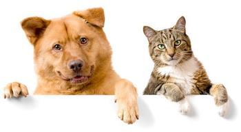 Как подружить свою собаку с котом?
