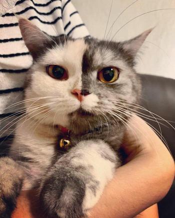 Кэт — двуликая кошка с двухцветной мордочкой