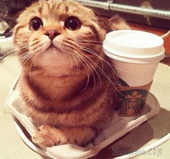 Кошки, которые ждут тепла больше, чем кто-либо
