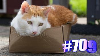 Коты и коробочки (часть 4) 💋💓🐾