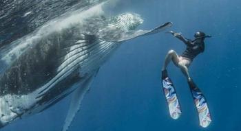 Потрясающие фото совместного плавания дайвера с огромным горбатым китом